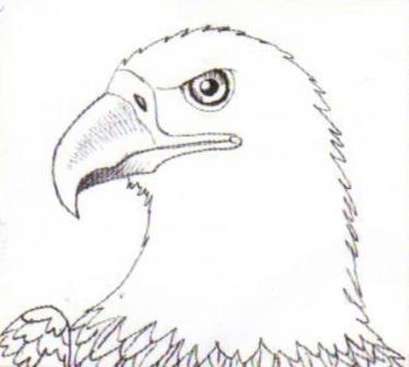 Как рисовать орла