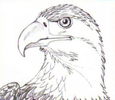 Как научится рисовать орла
