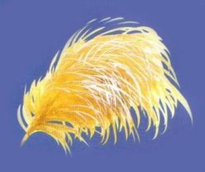 Виды перьев у птиц